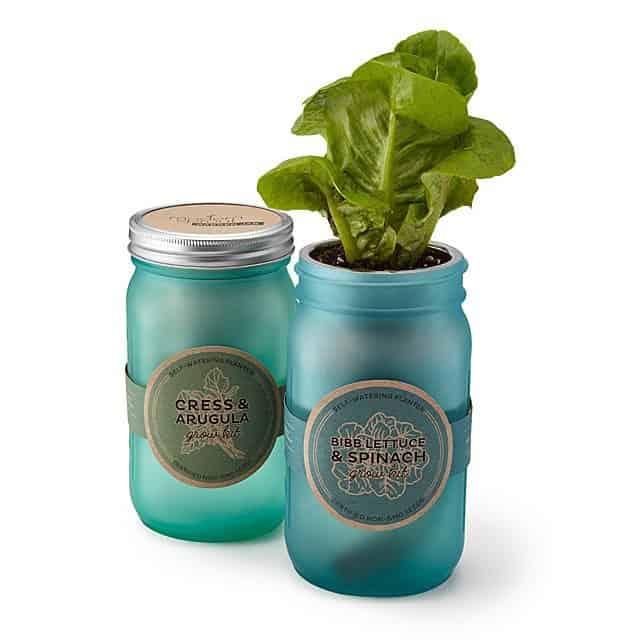 Leafy Greens Garden Jar